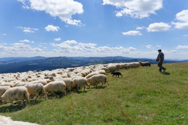 Śląskie: Konkursy na ochronę krajobrazu poprzez tradycyjną hodowlę