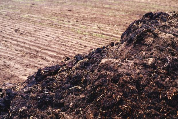 Opolskie: Rolnicy importują obornik z Holandii