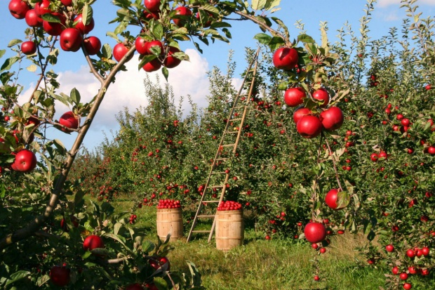 Izba rolnicza krytykuje zmiany w rozporządzeniu o rolnictwie ekologicznym