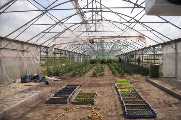 KE: Organizacjom producentów owoców i warzyw będzie łatwiej