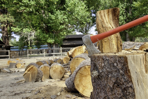 Prezes PiS: Na najbliższym posiedzeniu Sejmu zostanie uchwalona nowela ws. wycinki drzew