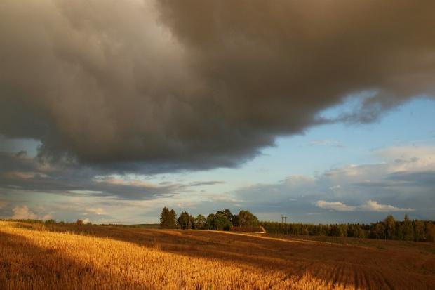 Federacja  protestuje przeciwko większemu kontyngentowi zbóż z Ukrainy