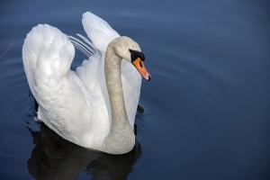 Ile kosztuje ASF i grypa ptaków?