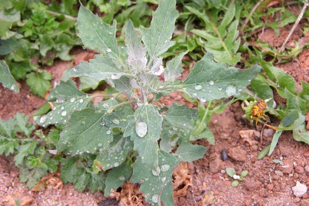 Innowacyjne adiuwanty do agrochemikaliów