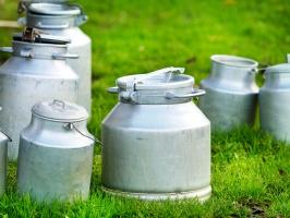 Komisja rolnictwa: Z produkcji mleka nie powinny wypadać małe gospodarstwa