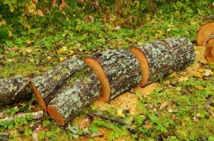 Projekt PiS dot. wycinki drzew na razie pozostanie w komisji