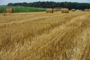 FAO: Przyszłość żywności i rolnictwa – trendy i wyzwania