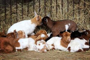 NIK i ETO skontrolują skuteczność  ochrony powietrza i zwierząt