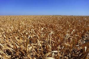 Senat za ustawą o ubezpieczeniach rolnych bez poprawek