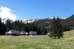 Przyrodnicy z TPN: Rozpoczął się sezon kwitnienia krokusów