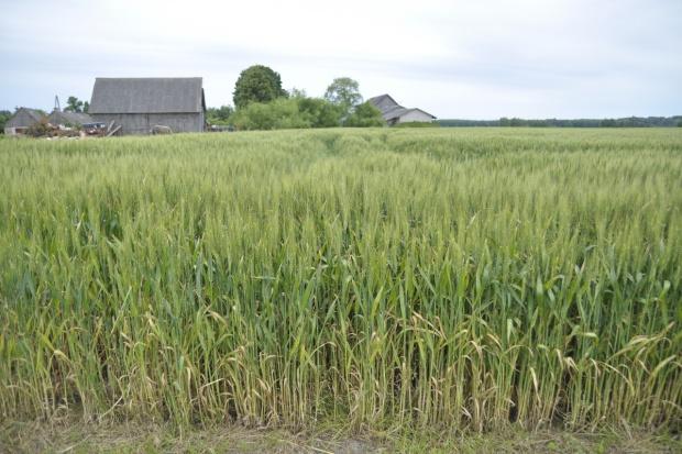 Prezydent podpisał nowelę ustawy o ubezpieczeniach upraw rolnych