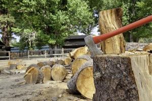 Komisja za zmianami PiS w ustawie o wycince drzew