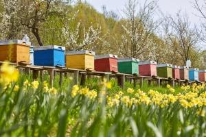 Warmińsko-mazurskie: Wzrosła liczba rodzin pszczelich w pasiekach
