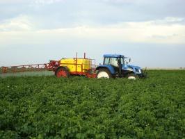 Falsyfikaty pestydcydów