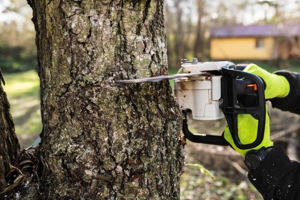 Sejm znowelizował przepisy w sprawie wycinki drzew na prywatnych gruntach