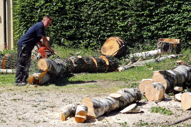 Rolnik może nadal wycinać drzewa