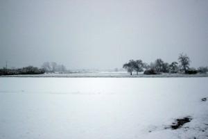 Nagły powrót zimy – uprawy zagrożone
