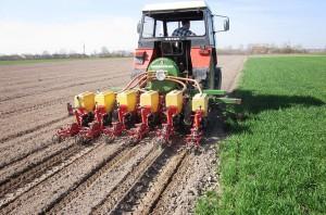 Ukraińscy rolnicy sieją więcej buraków