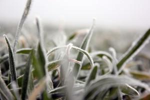 Z zabiegami ochrony roślin należy się wstrzymać jeszcze kilka dni