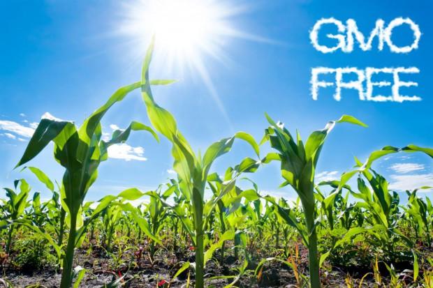Politycy PiS: Polska ma być wolna od GMO