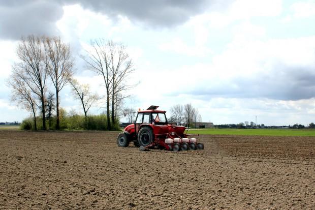 Siewniki do kukurydzy wróciły na pola