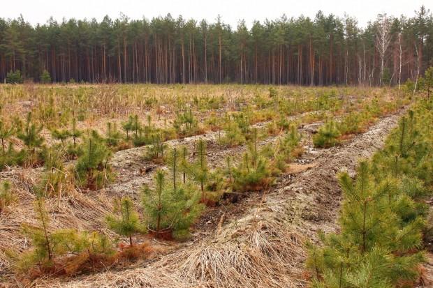 """Szyszko: Polskie lasy państwowe są """"świetnie zorganizowane"""""""