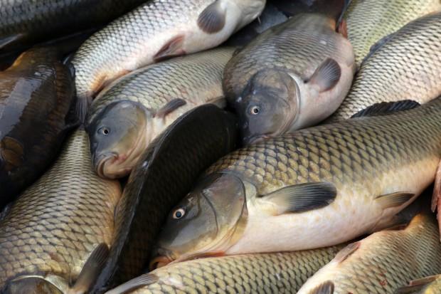 Rybacy domagają się przywrócenia dopłat wodno-środowiskowych