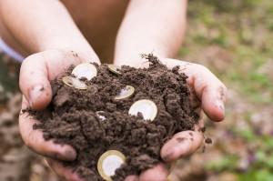 Strategia rozwoju wsi i rolnictwa wciąż w opracowaniu