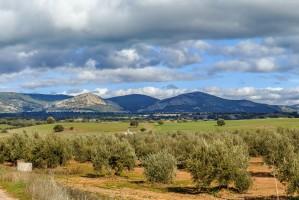 Hiszpański suchy kwiecień zbierze żniwo latem