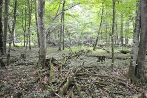 Resort środowiska: ws. Puszczy Białowieskiej działamy zgodnie z prawem