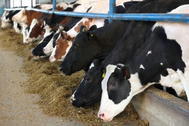 Zadyszka we wzrostach cen mleka w skupie