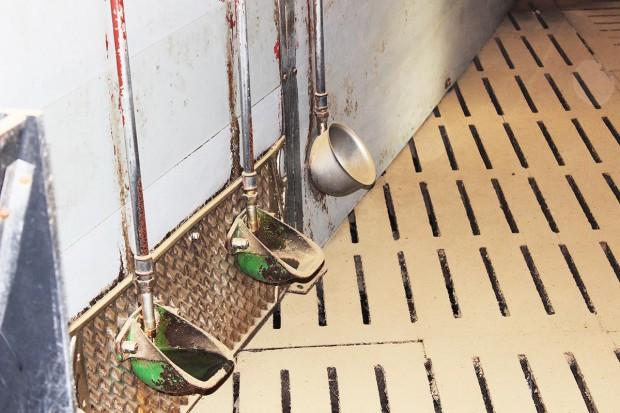 Zadbaj o jakość wody w chlewni