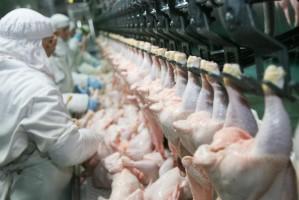 Ponad 600 nowych miejsc pracy planuje stworzyć w Radomiu firma QFG Food