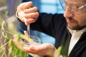 Polski startup do wykrywania patogenów zbóż walczy o milion dolarów