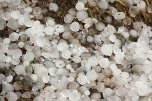 MRiRW: 4,3 mln zł wynoszą dotychczas oszacowane straty w rolnictwie