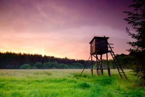 Portugalia: 10 proc. wpływów państwa z łowiectwa trafi na lasy
