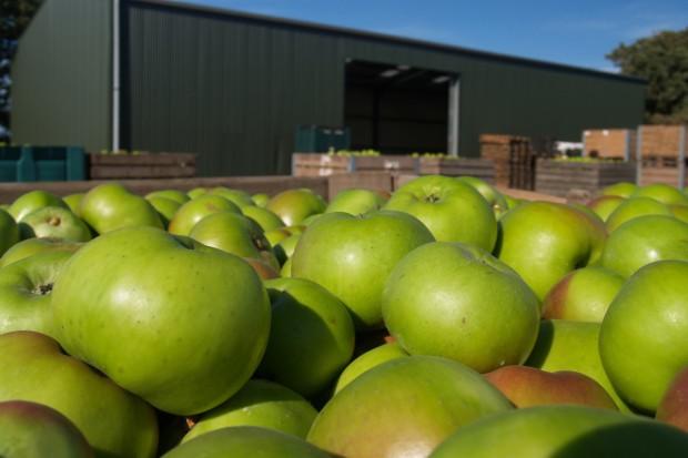 Związek Sadowników: Sady wymarzły, owoce mogą być droższe