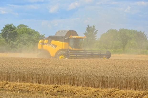 USDA: Prognoza mniejszej światowej produkcji pszenicy i zbóż paszowych