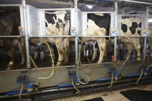 Od połowy kwietnia br. w Niemczech maleją dostawy mleka