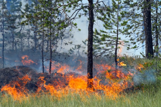 PSP: Już ponad 1000 pożarów lasów od początku roku