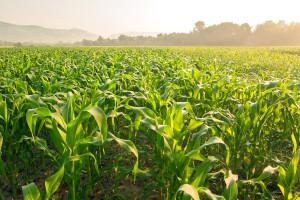 Każdy zapłaci 40 zł za ha użytków rolnych na ubezpieczenie?