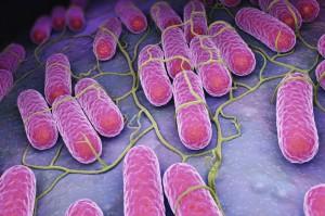 Rzeczpospolita: Nagły i wysoki wzrost zachorowań na salmonellozę w Polsce