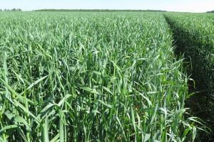 Instytut: W Polsce na razie nie ma suszy rolniczej