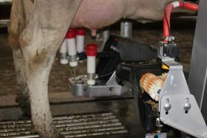 Rosną ceny produktów mlecznych