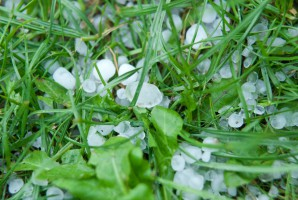 Straty klęskowe w rolnictwie sięgają już 125 mln zł