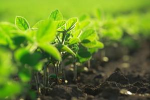 Senat zaproponował poprawki do ustawy o ochronie prawnej odmian roślin