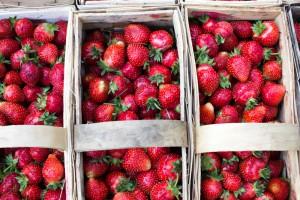 Eksperci: mniejsze zbiory truskawek - owoce będą droższe