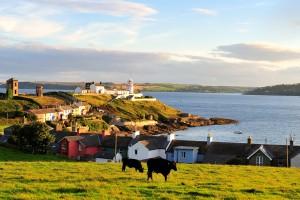 Niskie zarobki rolników w Irlandii? Co na to Polacy?
