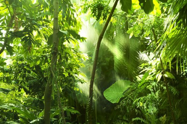 Coraz więcej lasów tropikalnych wycinanych na potrzeby rolnictwa rynkowego
