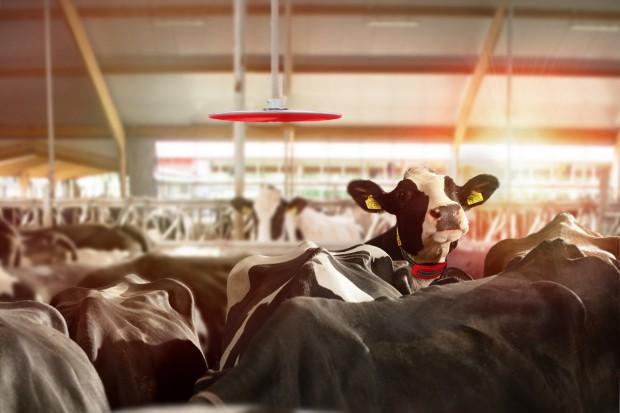 CowLocator do szybkiej lokalizacji krów